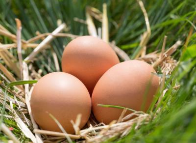 drei Eier im Stroh