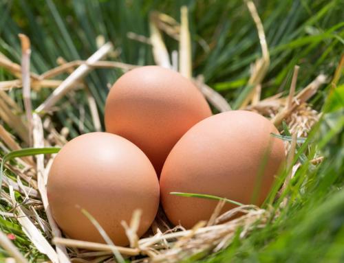 Eier und Geflügel sind unbelastet!