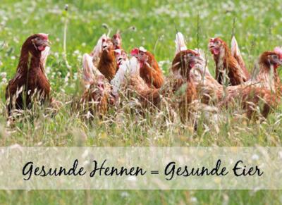 freilaufende Hennen