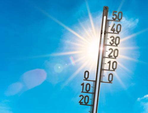 Verkürzte Marktzeiten durch anhaltende Hitze!